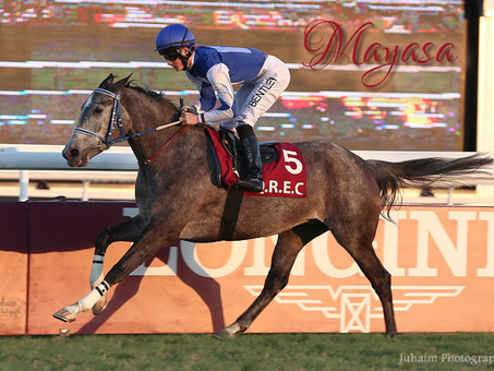 MAYASA is Arqana sale topper in France and wins the Purebred Fillies Championship in Qatar
