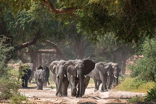 Damaraland_Elephants.jpg
