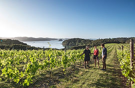 Wine-Bay-Of-Islands-Northland-Alistair-G