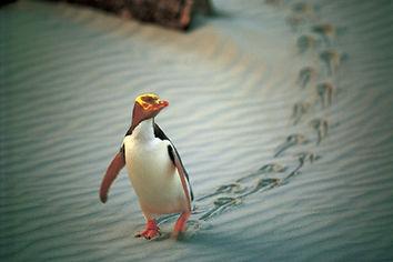 Penguin-Place-Otago.jpg