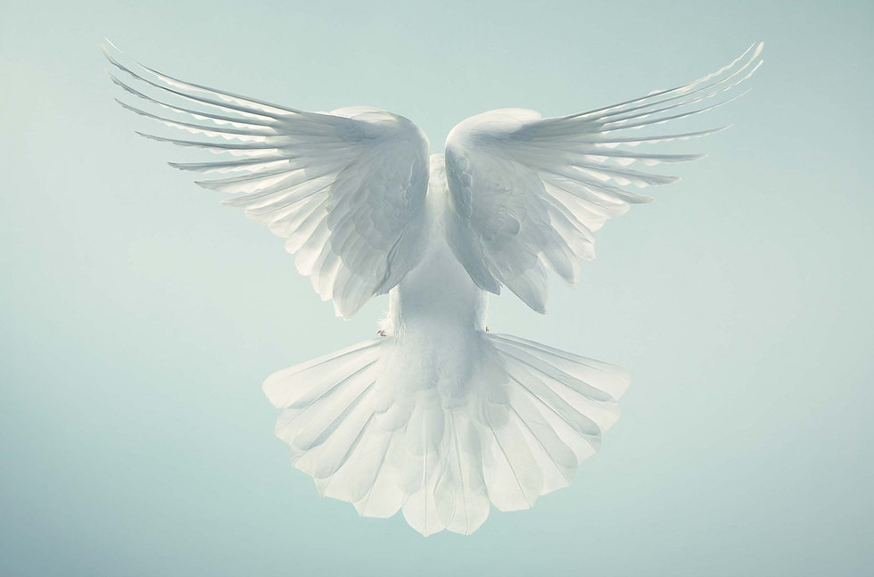 612164_dove-wallpaper.jpg
