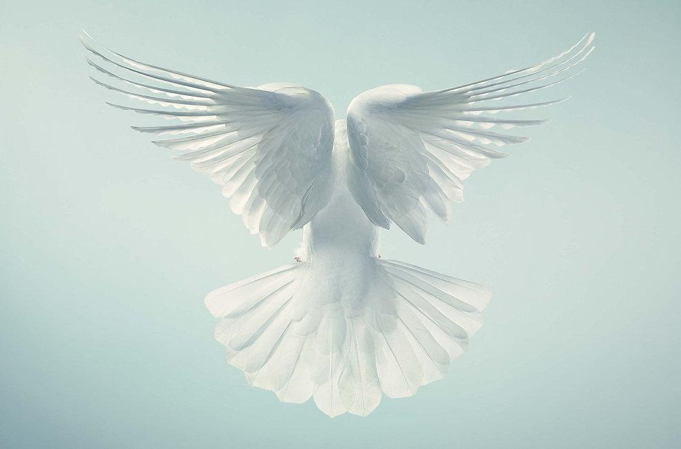 612164_dove-wallpaper.jpg