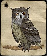 Watercolour wise owl
