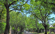 Trees: Our Mental, Physical, Climate Change Antidote