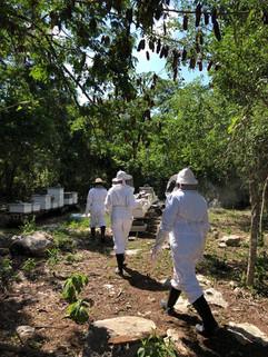 Honey Farm Tour | Yucatán, México