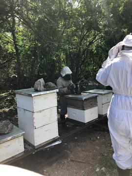 Honey Farm Tour | Mérida, México