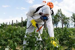 Court blocks Bayer weed killer sales in US