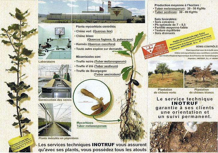 INOTRUF  spécialisée dans la production de plants mycorhizés de hautes qualités