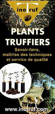 plants truffiers mycorhizés contrôlés