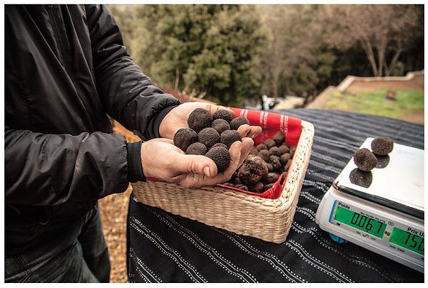 vente de truffes fraiches au détail, truffe sud cévenes