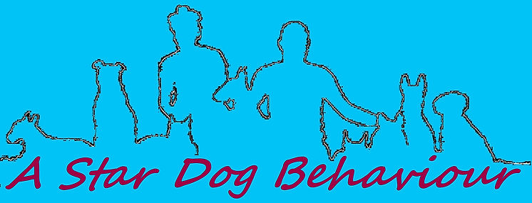 dog training, dog behaviour