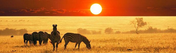 sud_africa_kruger_zebre_al_tramonto.jpg