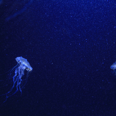 Think about it: Jellyfish