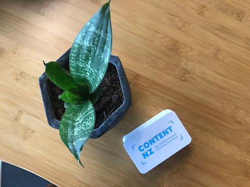 Content NZ Brand Deck