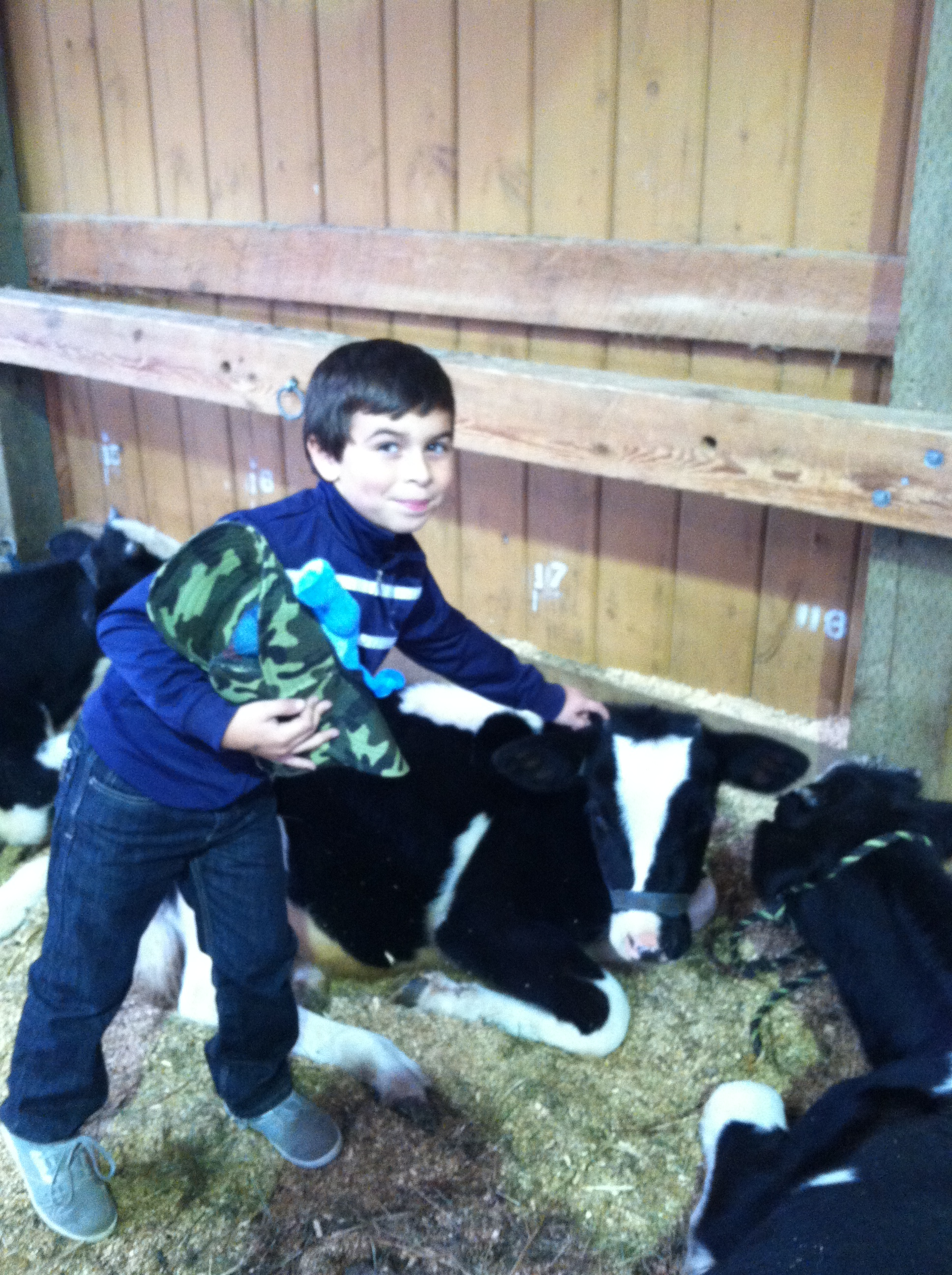 Hayden petting a calf!