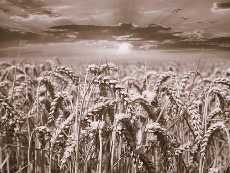 Vendere dalla Russia all'Italia: grano e cereali