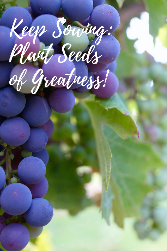 Keep Sowing:  Sowing Great Seeds in the Lives of Others! (Planting for a Harvest, Pt 2)