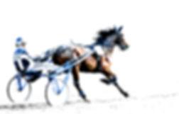Paard en race.jpg