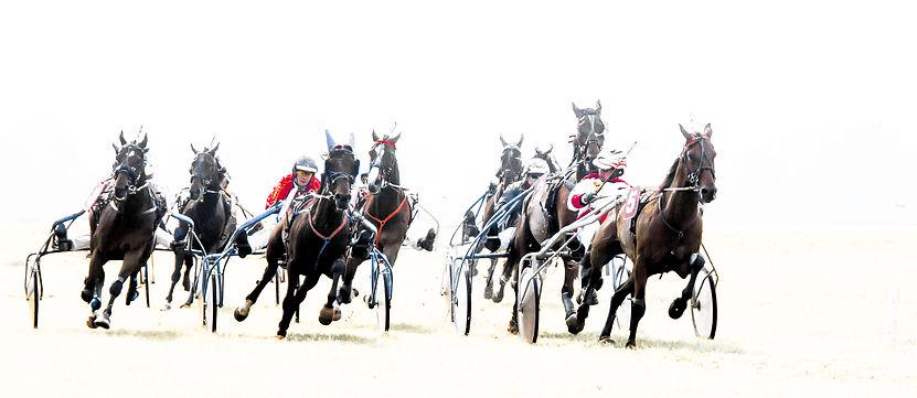 Paardenrace.jpg