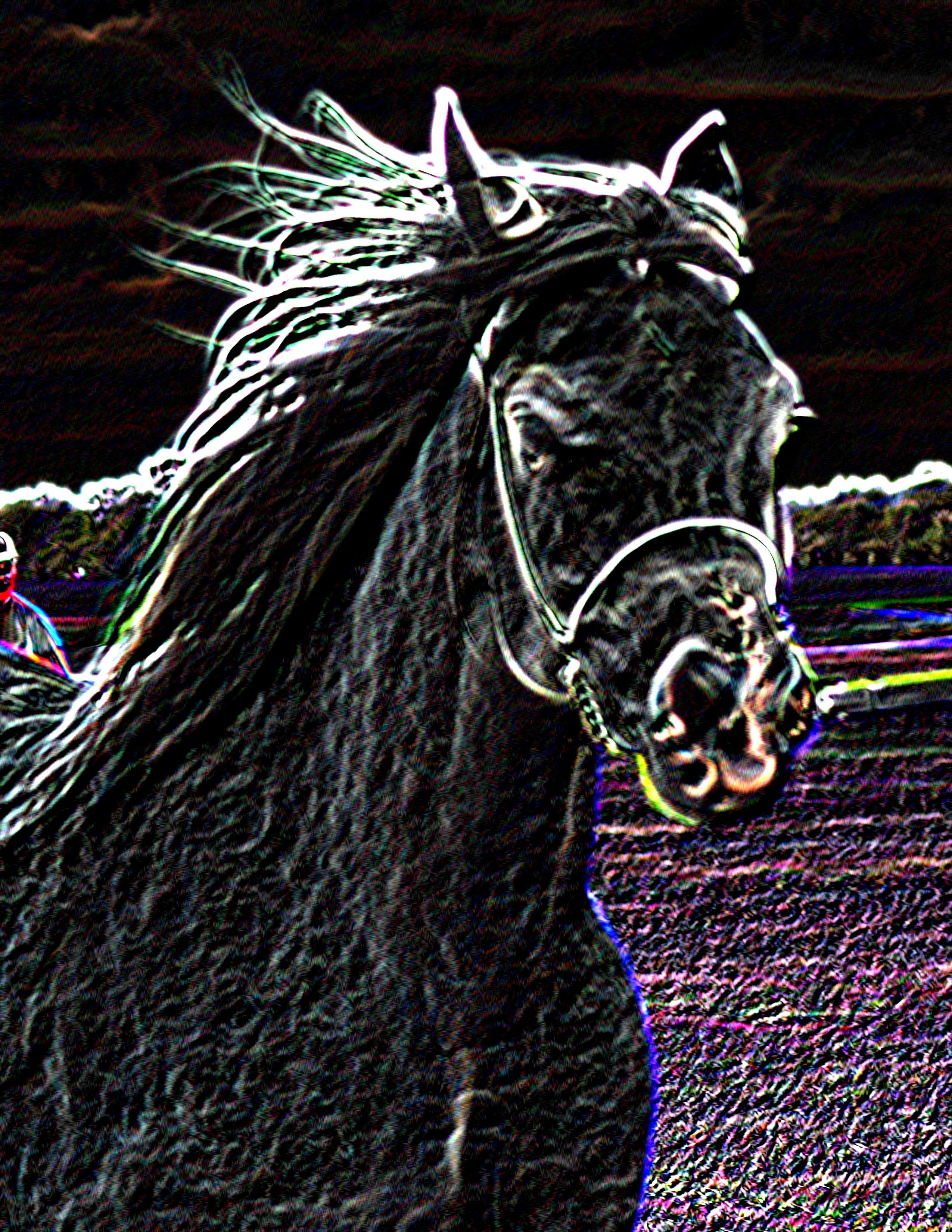 Neon Horse Photo 8.5x11 FINAL
