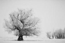 W Snow Tree painting 2014
