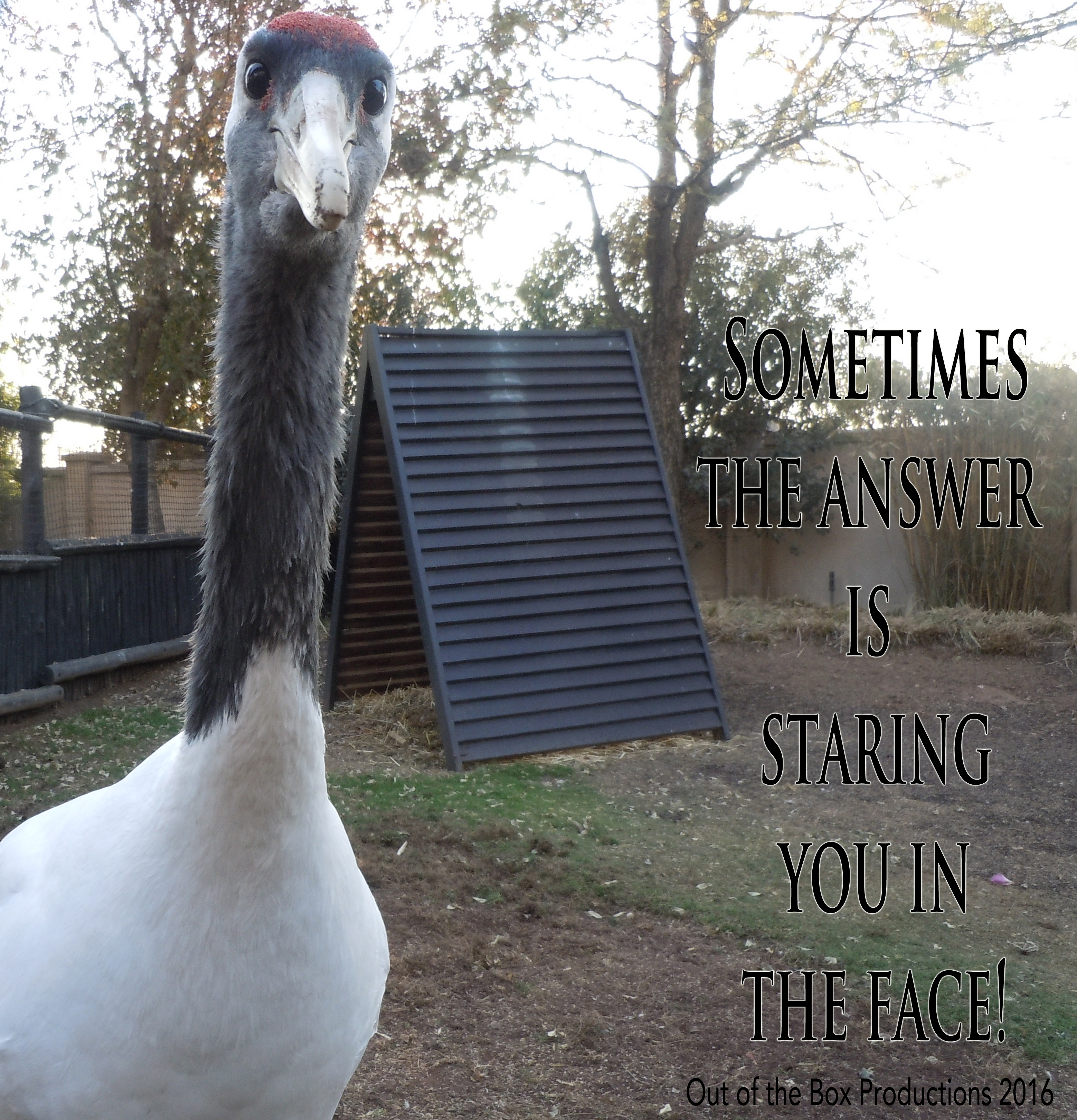 Staring in face Quote