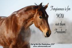 Forgiveness.horse