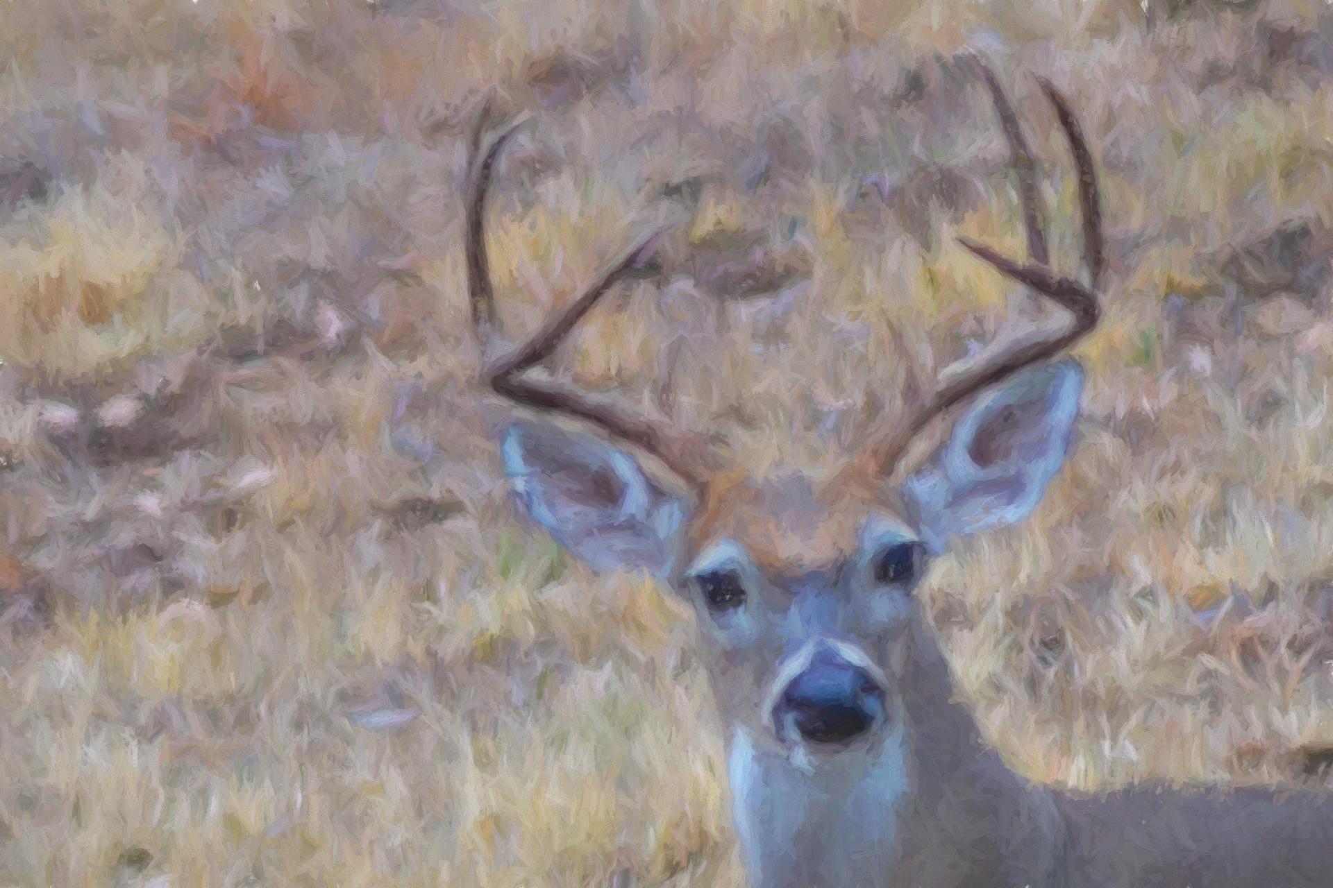 Deer Painting 1