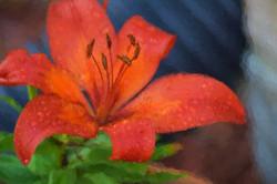 Orange Lily Impressionistic 2014