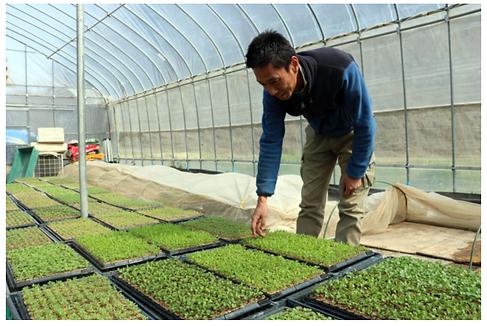 小淵沢野菜 畑.png