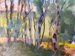 Backlit Birches - £250
