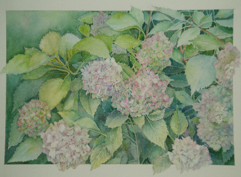 Hydrangeas - £225