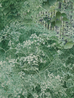 Cow Parsley - Jean Ellis - Watercolour -   H47xW38 cms