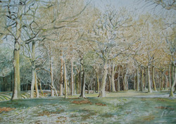 Trees in Winter - £225