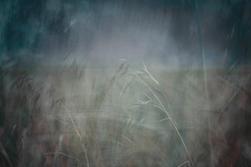 Vivarium2 Grasses