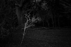 The Shape of Trees 5