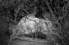 The Shape of Trees 8
