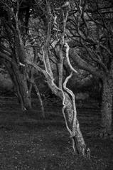 The Shape of Trees 13