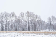 A Cold Light 13