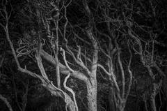 The Shape of Trees 2