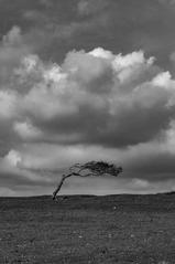 The Shape of Trees 6