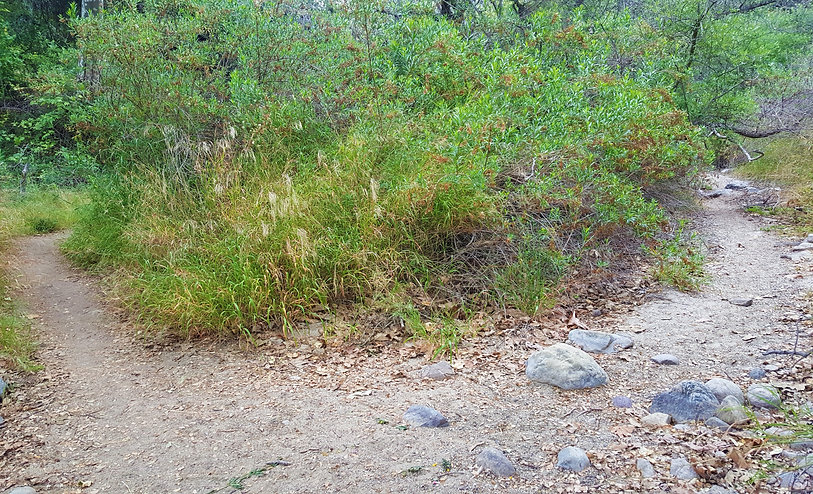 Santa Ynez Canyon trail, Topanga state park, Trippet ranch, malibu hike, california hike