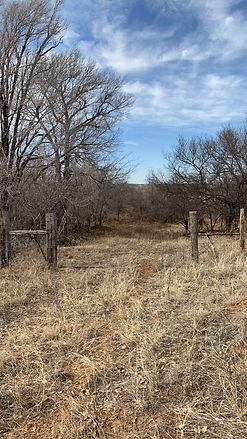 Field5.jpg