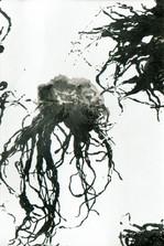 racines04.jpg