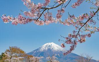 cherry-blossoms-mt-fuji-sakura1018.jpg