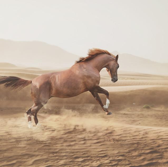 desert horse WM.jpg