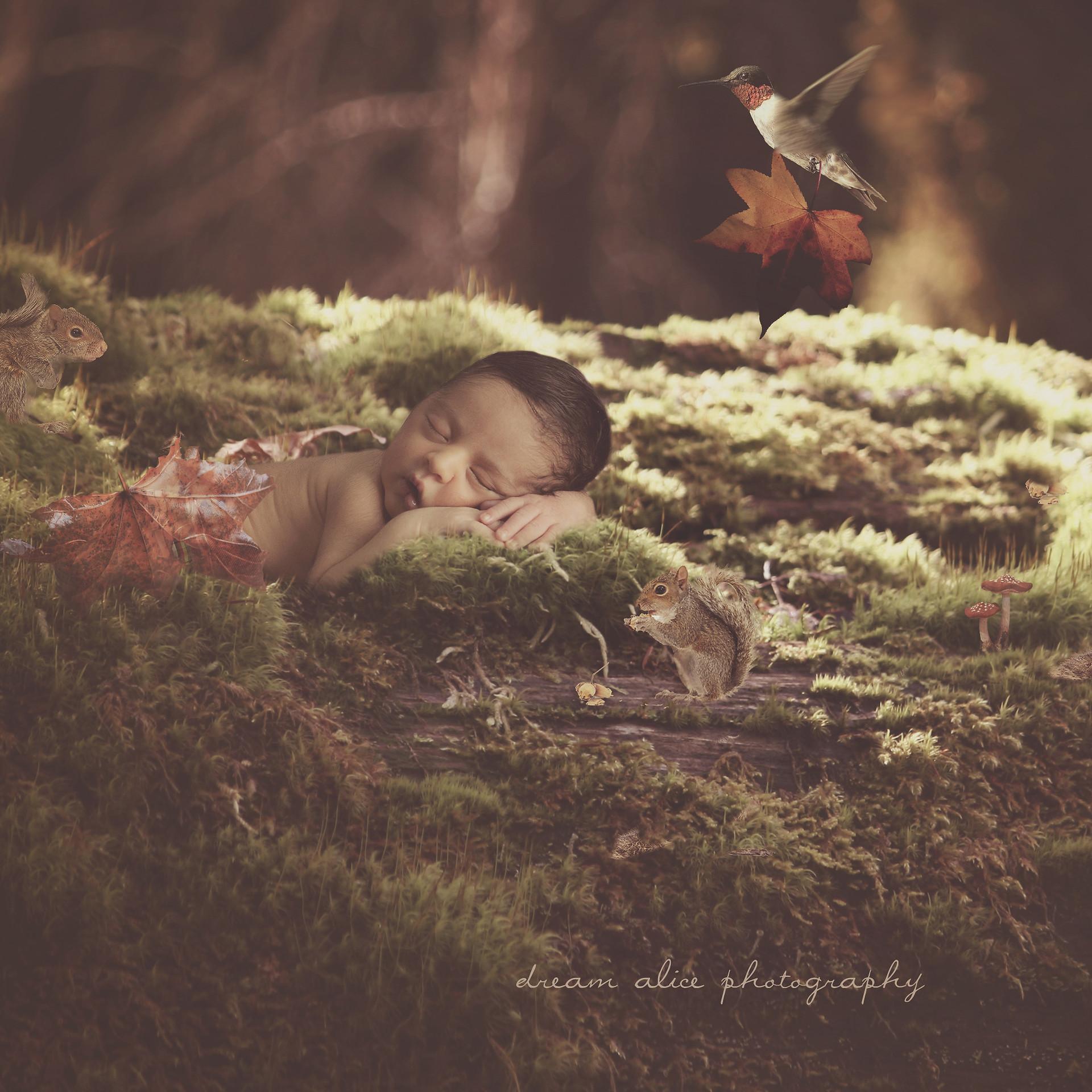 Dreams. Creative Newborn Baby Photography fantasy photoshoot, Dream Alice Photography & Art, Gold Coast
