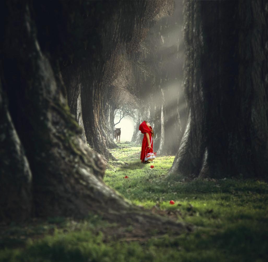 RR Hood Forest NO WM.jpg