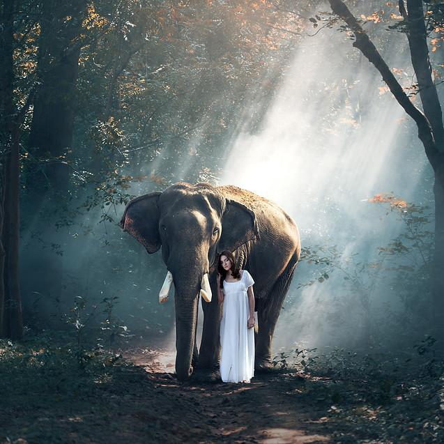 Love.Creative Children's Photography fantasy photoshoot, Dream Alice Photography & Art, Gold Coast