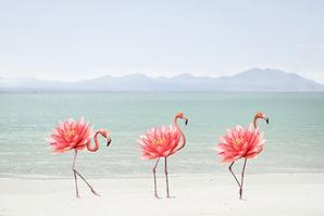 Flamingo Walk 1.jpg